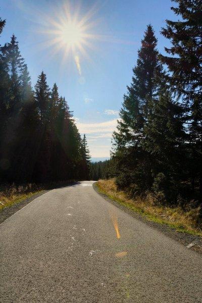 Weg zum Brocken im Gegenlicht