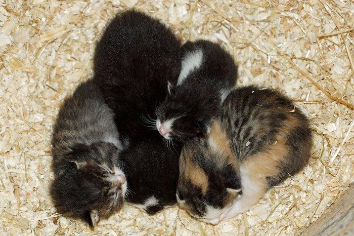 Baby-Kätzchen auf dem Bauernhof