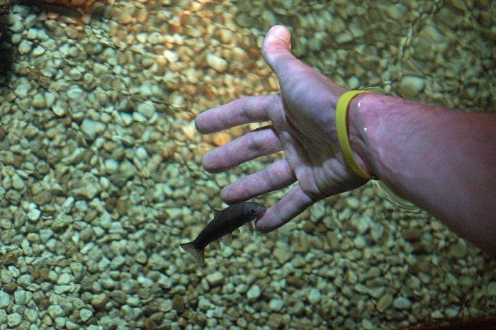 Ein Knabberfisch an meiner Hand