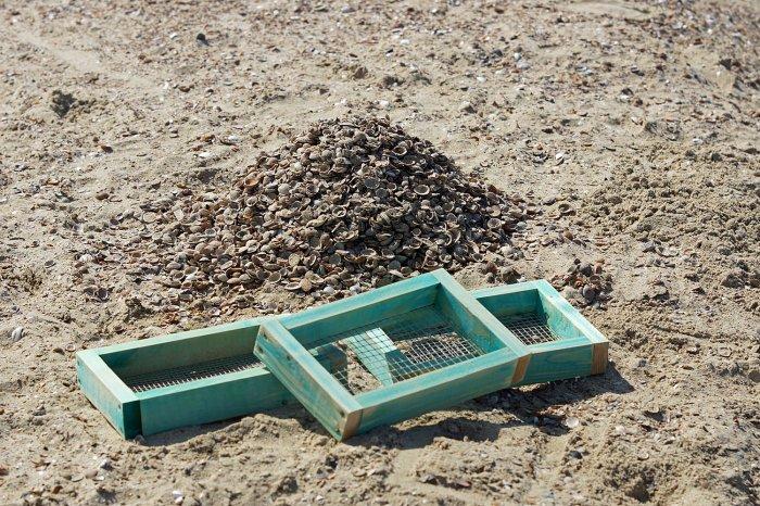 Haifischzahn-Suchequipment und durchsuchter Muschelhaufen